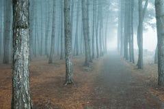 Σκοτεινό δασικό δάσος της Misty στην ομίχλη στοκ εικόνα με δικαίωμα ελεύθερης χρήσης