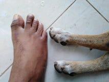 Σκυλί και ανθρώπινη έννοια 3 συντροφικότητας στοκ φωτογραφία με δικαίωμα ελεύθερης χρήσης