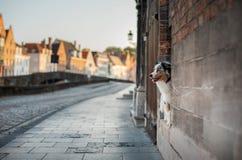 Σκυλί στην πόλη Pet για έναν περίπατο υπάκουος αυστραλιανός ποιμένας στοκ φωτογραφίες με δικαίωμα ελεύθερης χρήσης