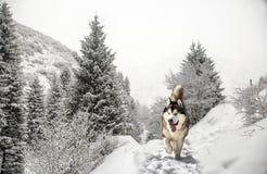 Σκυλί στο δάσος βουνών στοκ εικόνες