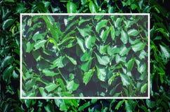 Σχεδιάγραμμα των πράσινων φύλλων στοκ εικόνες