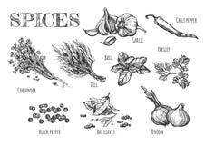 Συλλογή των ευωδών καρυκευμάτων και των χορταριών για τα πιάτα απεικόνιση αποθεμάτων