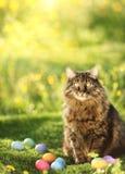 Συλλογή των ζωηρόχρωμων αυγών Πάσχας που φρουρούνται από τη γάτα στοκ φωτογραφία