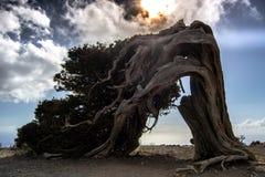 Συμβολισμός του νησιού meridiam, EL Hierro στοκ φωτογραφία με δικαίωμα ελεύθερης χρήσης
