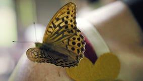 Συνεδρίαση πεταλούδων στον ώμο μιας γυναίκας και κυματισμός των φτερών του φιλμ μικρού μήκους