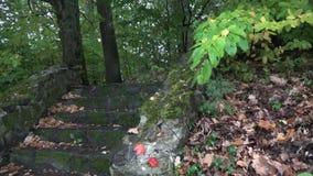 Σπάνια πτώση πτώσεων βροχής στα υγρά πράσινα φύλλα Ομορφιά της φύσης ενώ θερινός βροχερός καιρός Τα φρέσκα φύλλα δέντρων ταλαντεύ απόθεμα βίντεο