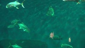 Ψάρια και θαλάσσια ζωή απόθεμα βίντεο