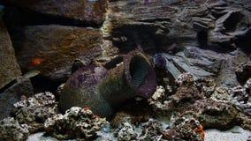 Ψάρια κοραλλιογενών υφάλων που κολυμπούν μπροστά από τα κοράλλια anemones στοκ φωτογραφία με δικαίωμα ελεύθερης χρήσης