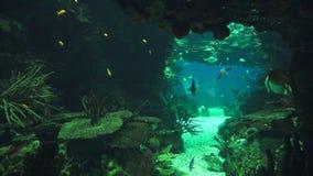 Ψάρια που κολυμπούν στο υποθαλάσσιο σπήλαιο απόθεμα βίντεο