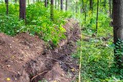 Τάφρος στο δάσος στοκ φωτογραφία με δικαίωμα ελεύθερης χρήσης