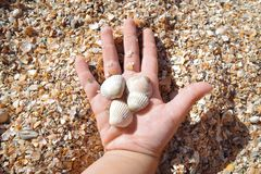 Τέσσερα μικρά κοχύλια στο χέρι ενός 2χρονου παιδιού στην παραλία μια ηλιόλουστη ημέρα στοκ εικόνες
