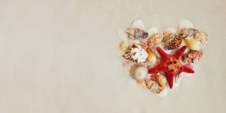 Τα κοχύλια θάλασσας και το κόκκινο αστέρι αλιεύουν στην αμμώδη παραλία με το διάστημα αντιγράφων για το κείμενο στοκ φωτογραφία