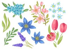 τα λουλούδια που τίθενται την άνοιξη Όμορφες διακοσμητικές φυσικές εγκαταστάσεις διανυσματική απεικόνιση
