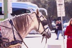 Τεμάχιο ενός επισημασμένου άσπρου αλόγου ενάντια σε μια οδό πόλεων με τους ανθρώπους και τα αυτοκίνητα μια ηλιόλουστη ημέρα στοκ φωτογραφίες