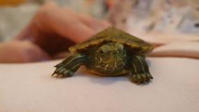 Της Pet χελωνών τρελλός δροσερός εστίασης ζωής πράσινος στοκ φωτογραφία με δικαίωμα ελεύθερης χρήσης
