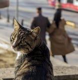 Τη γάτα Homless που γύρισαν και κοίταξε ανασκόπηση που θολώνεται στοκ εικόνες