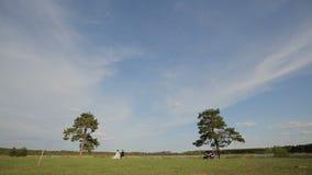 Τομέας με τα δέντρα ενάντια στο μπλε ουρανό απόθεμα βίντεο