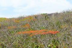 Τοπίο των κόκκινων ανθίζοντας δέντρων μπροστά από το μπλε ουρανό στο νησί του Μπαλί στοκ φωτογραφία με δικαίωμα ελεύθερης χρήσης