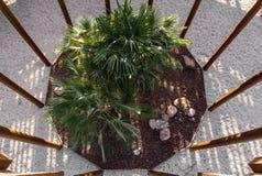 Τοπ άποψη ενός κήπου μέσα σε μια δομή στοκ εικόνες