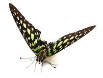 Τοπ άποψη της πεταλούδας ασβέστη στο άσπρο υπόβαθρο στοκ φωτογραφία με δικαίωμα ελεύθερης χρήσης