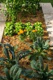 Τοπ κήπος Vegie άποψης στοκ φωτογραφία με δικαίωμα ελεύθερης χρήσης