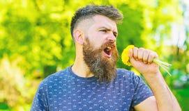 Το άτομο με τη γενειάδα και mustache στο ευτυχές πρόσωπο κρατά την ανθοδέσμη των πικραλίδων ως μικρόφωνο Γίνοντη Hipster ανθοδέσμ στοκ φωτογραφία με δικαίωμα ελεύθερης χρήσης