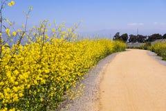 Το ίχνος κόλπων, Sunnyvale, περιοχή κόλπων του νότιου Σαν Φρανσίσκο, Καλιφόρνια στοκ εικόνες με δικαίωμα ελεύθερης χρήσης