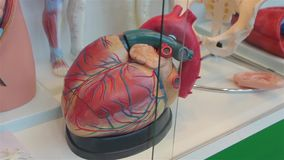 Το ανθρώπινο πρότυπο καρδιών φιλμ μικρού μήκους
