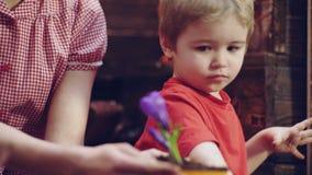 Το ευτυχές ξανθό αγόρι βοηθά τα σπορόφυτα εγκαταστάσεων για τη φύτευση στο ανοικτό έδαφος στο αγρόκτημα των γονέων Σπορόφυτο εκμε απόθεμα βίντεο