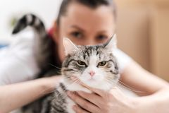 Το κορίτσι κρατά στα χέρια της μια κακή δυσαρεστημένη γάτα στοκ εικόνα με δικαίωμα ελεύθερης χρήσης