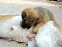 Το κουτάβι απορροφά το σκυλί στο έδαφος, άστεγο σκυλί στοκ φωτογραφία