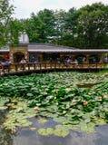 Το λευκό ανθίζει waterlily στη λίμνη στον κήπο στοκ φωτογραφία με δικαίωμα ελεύθερης χρήσης