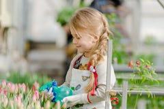 Το μικρό κορίτσι ψεκάζει τις τουλίπες νερού στο θερμοκήπιο στοκ εικόνες