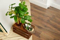Το ντεκόρ για τις διακοπές Πάσχας, ένα βάζο με τα πράσινα φύλλα και το mimosa ανθίζει στοκ εικόνες