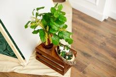 Το ντεκόρ για τις διακοπές Πάσχας, ένα βάζο με τα πράσινα φύλλα και το mimosa ανθίζει στοκ φωτογραφία με δικαίωμα ελεύθερης χρήσης