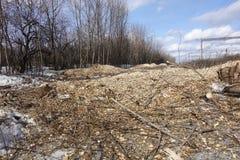 Το δάσος καταστρέφεται από τους εμπόρους ξυλείας Κενό διάστημα χωρίς δέντρα με τα κολοβώματα και τις αγκίδες στοκ εικόνα