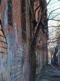 Το δέντρο από τον τοίχο στοκ εικόνα με δικαίωμα ελεύθερης χρήσης
