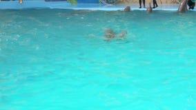 Το δελφίνι θηλυκών και μωρών κολυμπά απόθεμα βίντεο