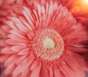 Το ρόδινο λουλούδι κλείνει την άποψη στοκ φωτογραφία με δικαίωμα ελεύθερης χρήσης