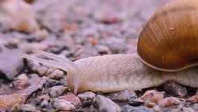 Το σαλιγκάρι διασχίζει την οδό φιλμ μικρού μήκους