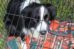 Το σκυλί κάθεται στο κλουβί πίσω από τους φραγμούς και κοιτάζει δυστυχώς στοκ εικόνες με δικαίωμα ελεύθερης χρήσης