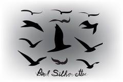 Το σύνολο πουλιών σκιαγραφεί το διανυσματικό εικονίδιο ελεύθερη απεικόνιση δικαιώματος