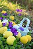 Το υπόβαθρο Πάσχας άνοιξη με τα χρωματισμένα αυγά, κρόκος ανθίζει, καλάθι στον κήπο στοκ εικόνες