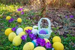 Το υπόβαθρο Πάσχας άνοιξη με τα χρωματισμένα αυγά, κρόκος ανθίζει, καλάθι στον κήπο Κυνήγι αυγών στοκ εικόνες