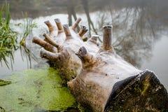 Το παλαιό κούτσουρο που καρφώνεται στην όχθη ποταμού στοκ φωτογραφία με δικαίωμα ελεύθερης χρήσης