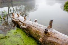 Το παλαιό κούτσουρο που καρφώνεται στην όχθη ποταμού στοκ φωτογραφία