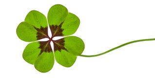 Το πράσινο τριφύλλι με τέσσερα βγάζει φύλλα στοκ φωτογραφίες