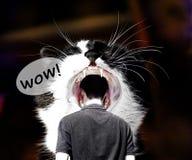 Το πρόσωπο έχει την ώθηση ένα κεφάλι σε ένα στόμα σε μια τεράστια γάτα στοκ φωτογραφία με δικαίωμα ελεύθερης χρήσης