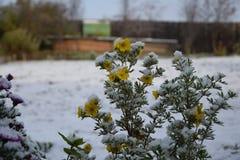 Το πρώτο χιόνι στοκ φωτογραφία