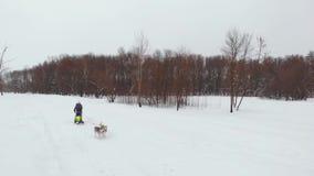 Το Huskies τρέχει το χειμώνα στο λουρί μέσω του χιονιού και οδηγεί μια γυναίκα σε ένα έλκηθρο πίσω από τον φιλμ μικρού μήκους